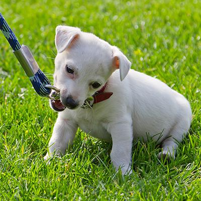 Dog Training Fort Lauderdale