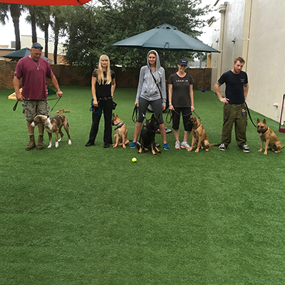 Dog Training Fort Lauderdale