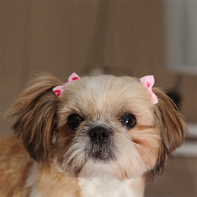 Dog Grooming in Fort Lauderdale