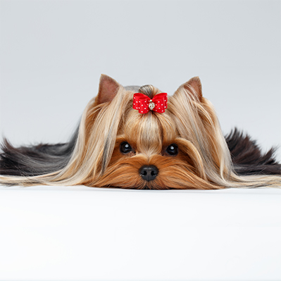 Dog Grooming in Fort Lauderdale