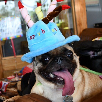 Dog Birthday celebration Fort Lauderdale