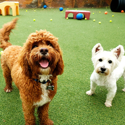 Dog Daycare Fort Lauderdale